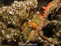 Moving home.. Hermit crab evicting the current tenant for... by Adrian Slack